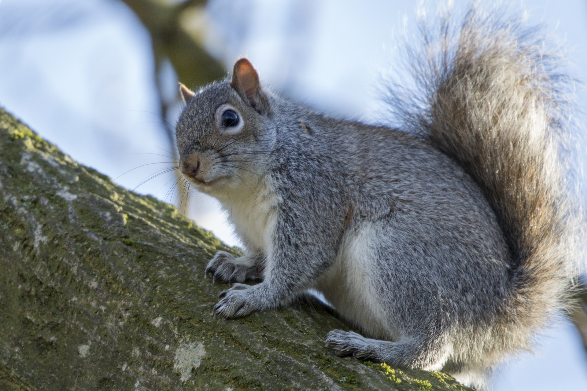 5 Things You Need To Know About Squirrel Removal