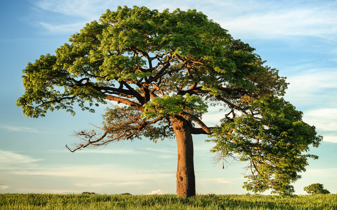 How To Imagine The Best Climate Change Resilient Trees and Landscapes