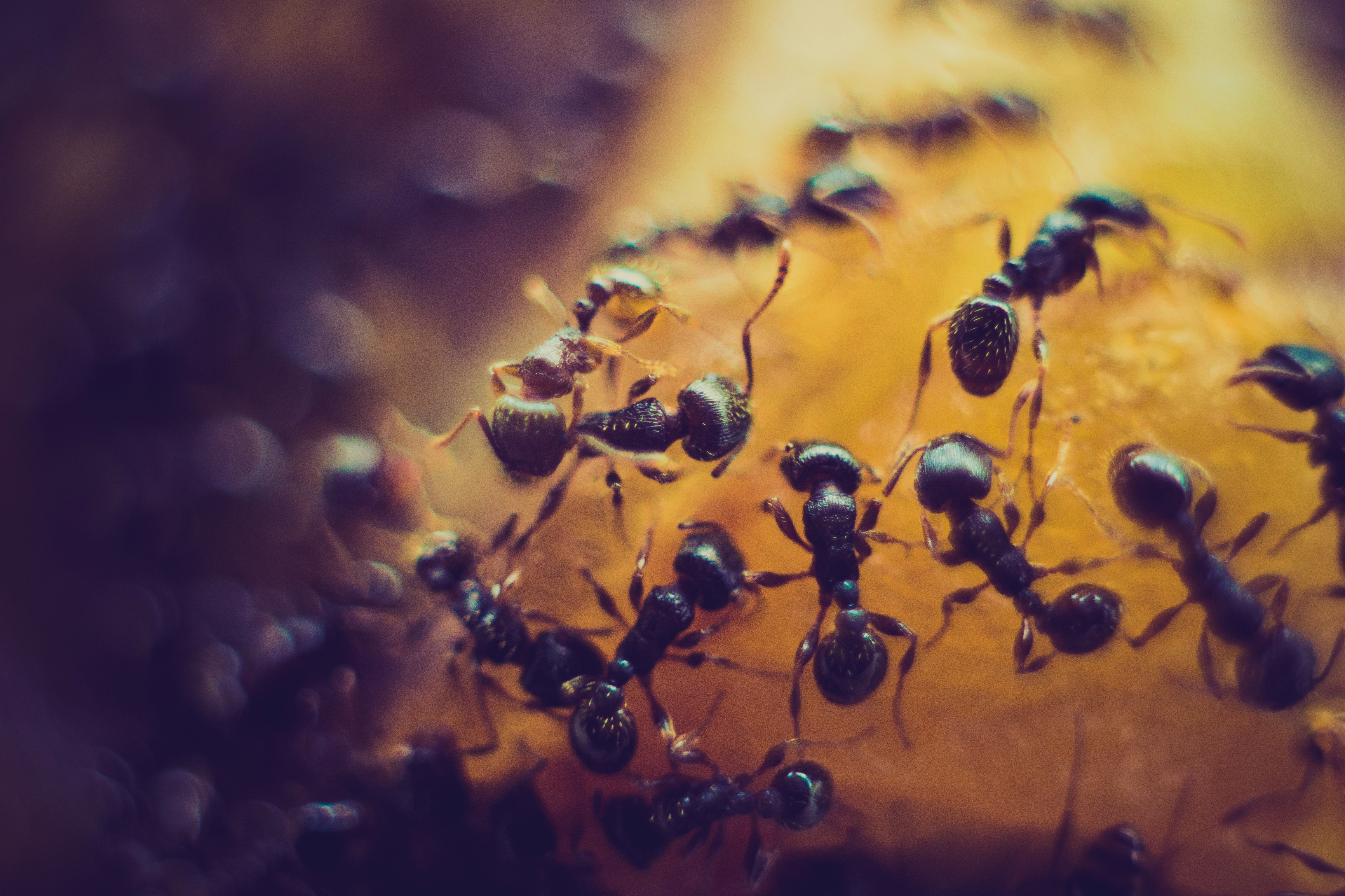 Is All Natural Pest Control A Good Way To Manage Ants?