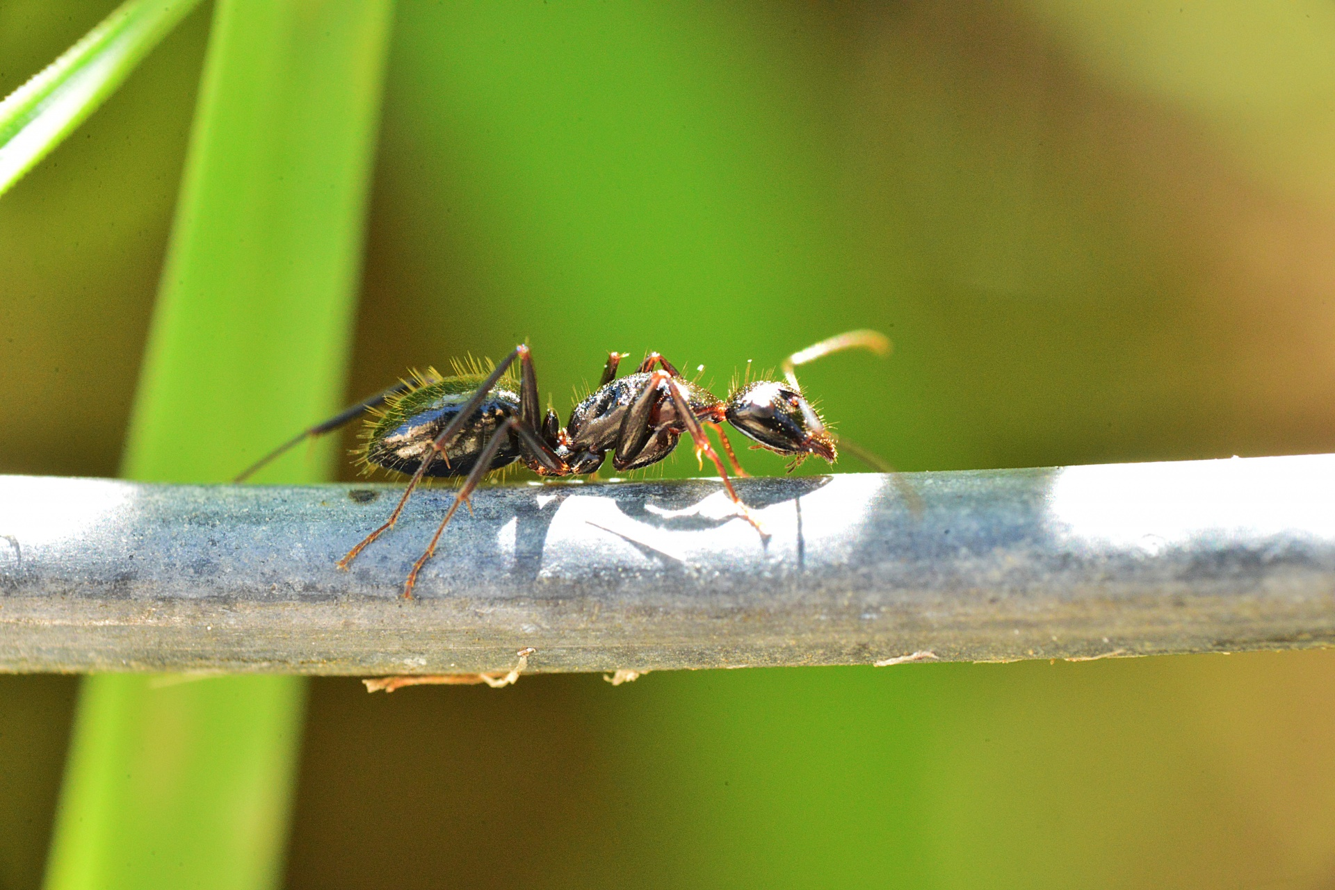 Essential Information on How to Get The Best Ant Control